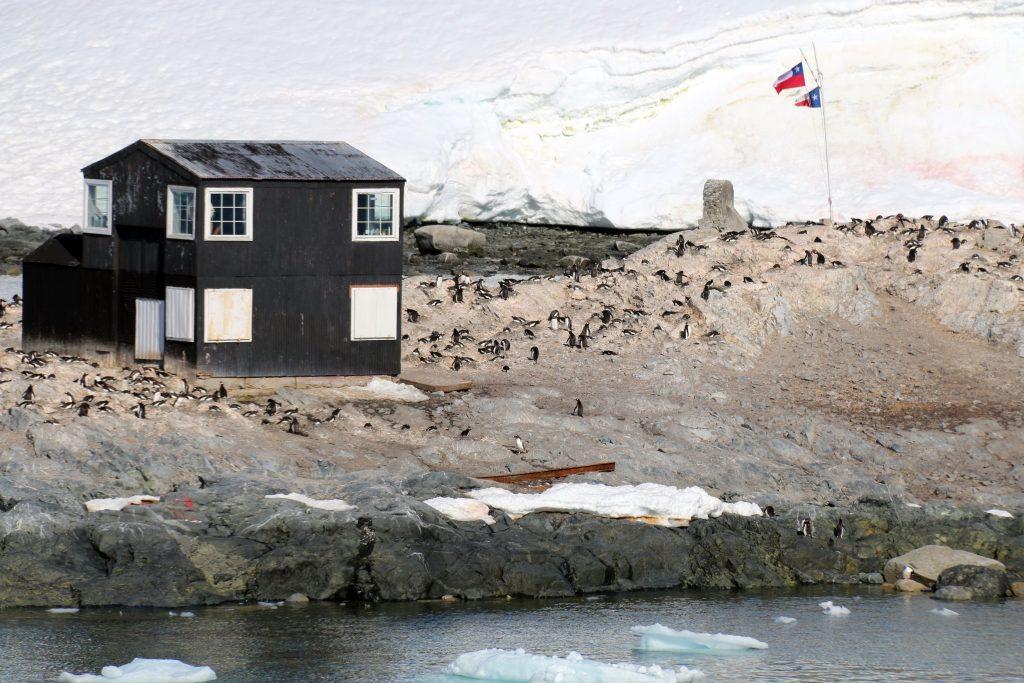Pingvinerne har taget over