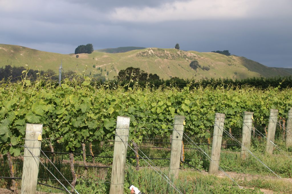 Idyl i Martinborough