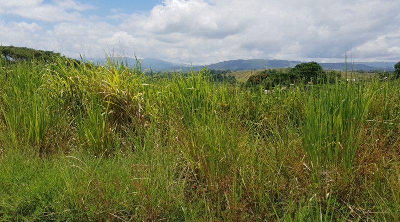 Guadalcanal – brændpunktet i Stillehavskrigen